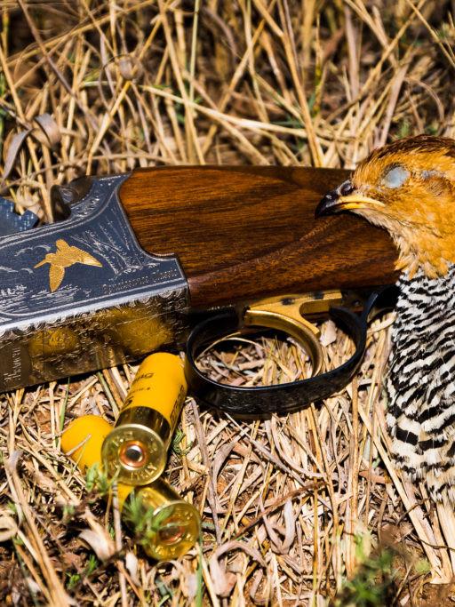 hunting coqui francolin
